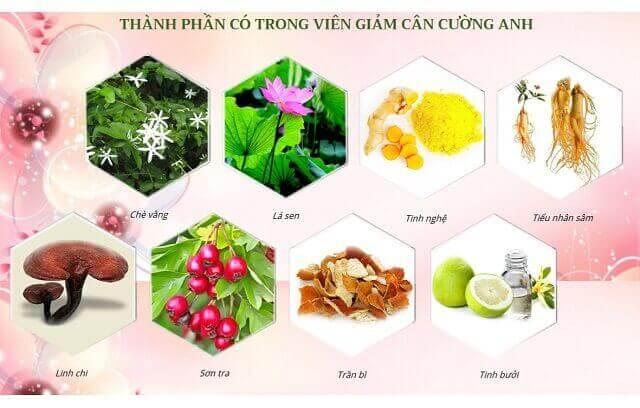 Các thành phần chủ yếu của trà giảm cân Cường Anh